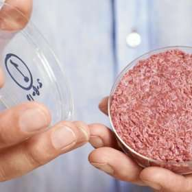 Nutreco partners with cell-based protein companies