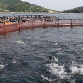 Potencial y oportunidades para las tecnologías digitales en la acuicultura en estanques