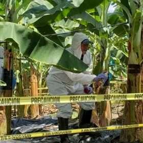 "Expertos taiwaneses en ""Fusarium"" visitan Honduras"