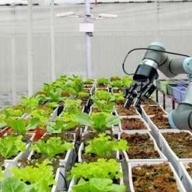 Agro 4.0: el desafío de transformar al sector en una industria más redituable y sustentable