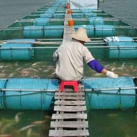 In attempts to expand, aquaculture industry faces uphill regulatory pathway