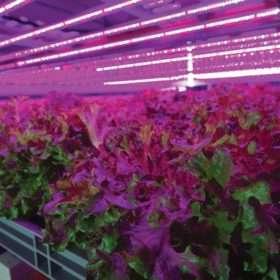 Granjas verticales, el futuro de los alimentos