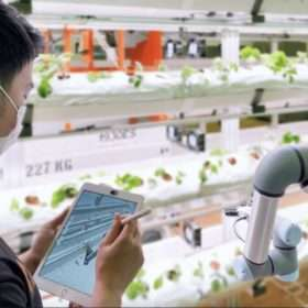 Meet 4 Singapore Food Bowl startups who want to revolutionize farming with tech